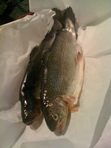 whole trout fillets