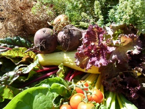 harvest from Dainty's community garden plot