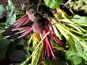 Beets and chard