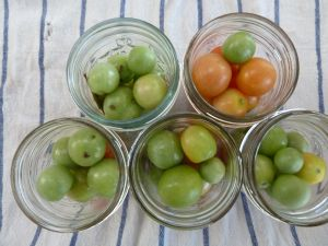 filling jars with green tomatoes