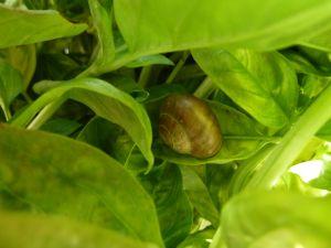 Snail-along