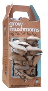 Back to the Roots Pearl Oyster Mushroom Kit