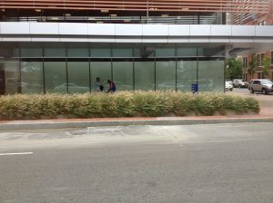 Landscaping around the Shapiro Building at Boston Medical Center served as inspiration.
